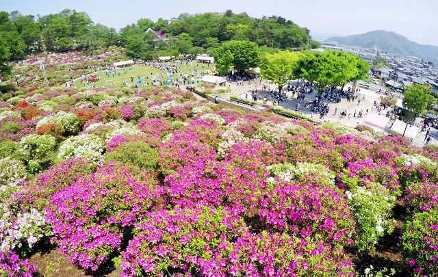 色とりどりのツツジの花が咲き誇るさばえつつじまつりの会場=3日、鯖江市西山公園