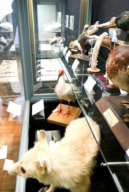 日本の伝統的な色名の由来となった動物の剥製などを展示し、自然の色彩の美しさを伝える企画展=福井県の福井市自然史博物館