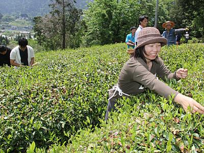 南木曽で茶摘み、魅力満喫 商品化目指し体験ツアー