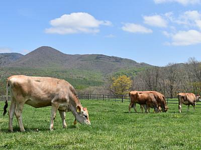 牛も避暑、戸隠牧場で放牧開始 ふれあい動物広場も