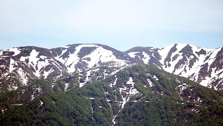 さまざまな雪形が見える僧ケ岳(魚津市大海寺新で撮影)