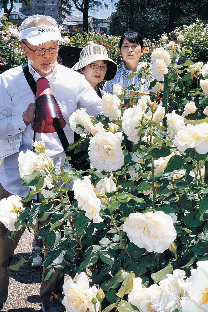 見頃を迎えたバラ=金沢南総合運動公園