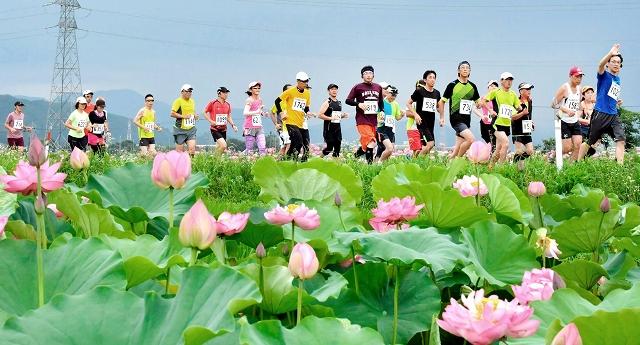鮮やかに咲く花ハスの里を駆け抜けた2017年大会=福井県南越前町堂宮