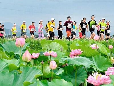 花ハスの道駆けよう 7月7日福井・南越前マラソン