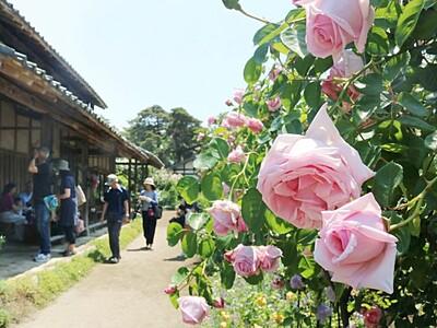 バラ300種美の競演 聖籠・二宮家
