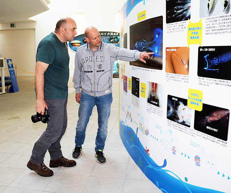 ホタルイカの生態を説明したパネルに関心を示すドイツ人観光客