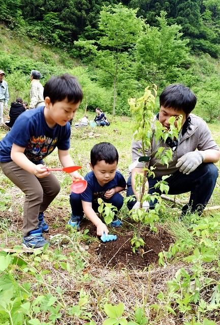 ウメの苗木を植える親子連れ=6月2日、福井県福井市折立町