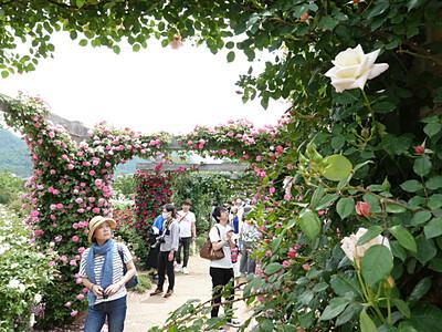 中野のバラ、広がる楽しみ 一本木公園の「まつり」