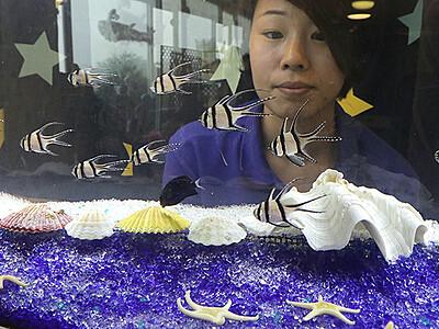 星模様の魚見に来て 魚津水族館