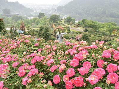 バラもイベントも多彩に 伊那・高遠で23日まで祭り