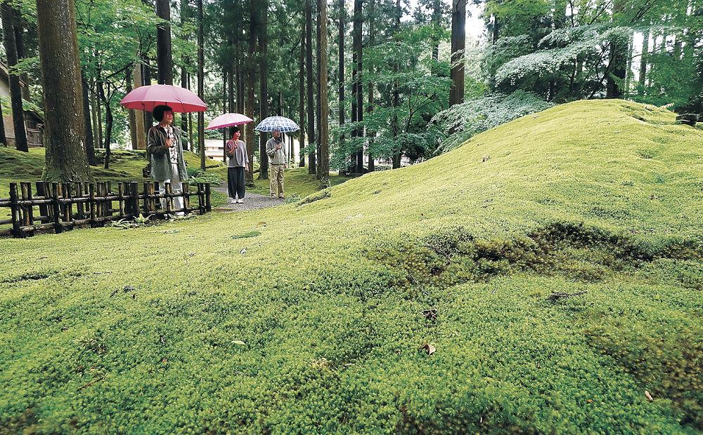 雨で輝きを増した苔庭に見入る来園者=小松市日用町の苔の里