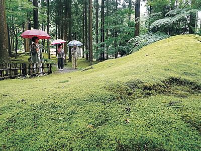 緑のじゅうたん、雨で輝き増す 小松・苔の里