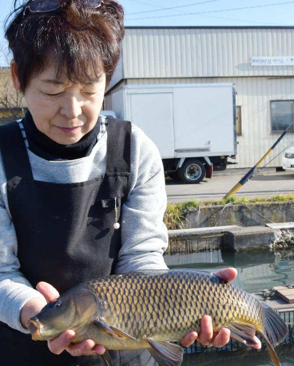 佐久養殖漁業協同組合の養殖池で育てた佐久鯉