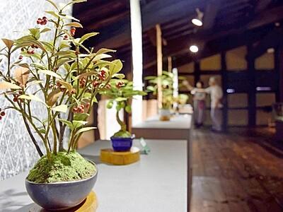 まるで本物 和紙の盆栽 福井・越前市で個展