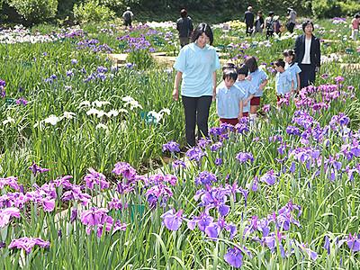 花しょうぶ祭り始まる 砺波・頼成の森