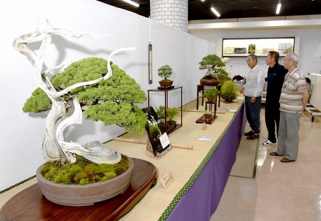 多彩な作品が目を引く合同盆栽展=6月15日、福井県福井市の県産業会館