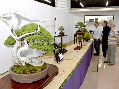 盆栽の魅力存分に 愛好家が披露 福井で3団体が合同展