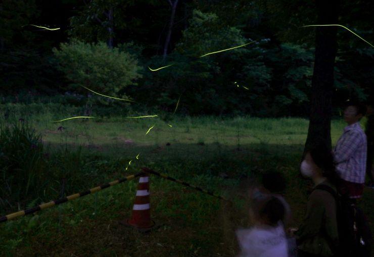 間近で淡い光が飛び交う「ホタルの夕べ」=15日夜、長岡市の雪国植物園