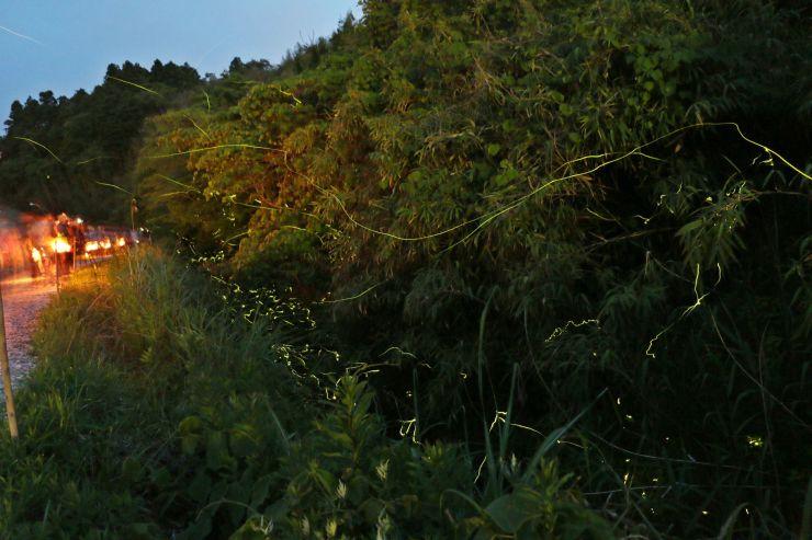 光の軌跡を描きながら天王川沿いを舞うホタル=佐渡市新穂潟上(2017年の様子)