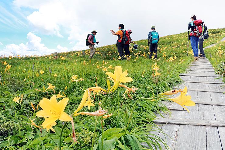 ニッコウキスゲの群生で知られる白木峰山頂付近(昨年7月撮影)