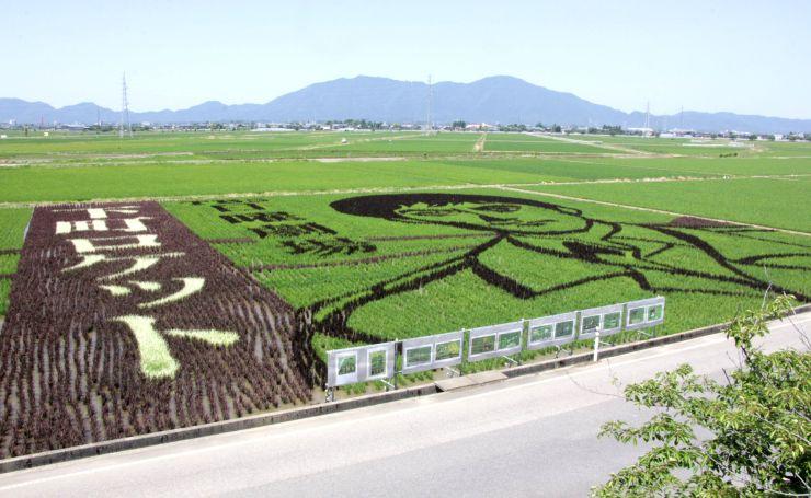 下町ロケットに主演した阿部寛さんなどをデザインした田んぼアート=燕市