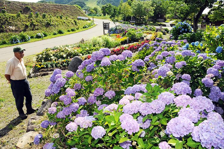 鮮やかなアジサイや花々が咲き誇る花壇を眺める長谷川さん(左)