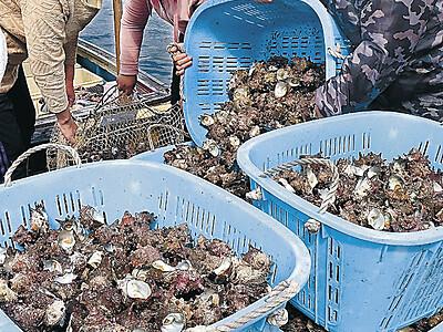 輪島で海女漁解禁 初日低調も「これから」