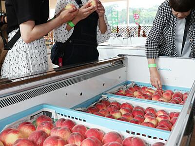 みずみずしい豊丘の桃に感激 収穫体験始まる