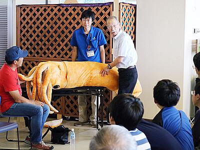 ダイオウイカを解説 魚津水族館でドキュメンタリー映画上映