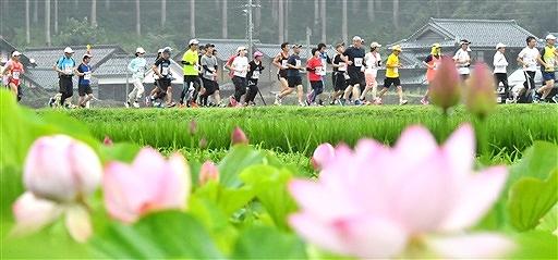 花ハスに彩られたコースを楽しみ、早朝の山里を駆け抜ける10キロのランナー=7月7日午前6時半ごろ、福井県南越前町堂宮