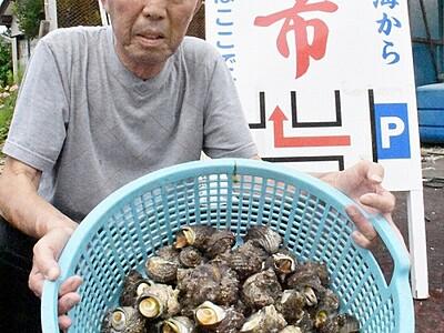 雄島の新鮮魚介いかが 坂井・三国、14日から朝市