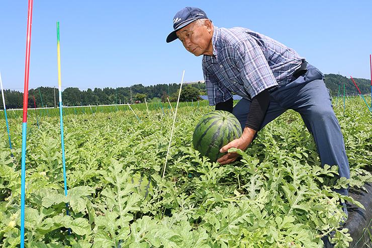 「かがやき」を収穫する金田支部長