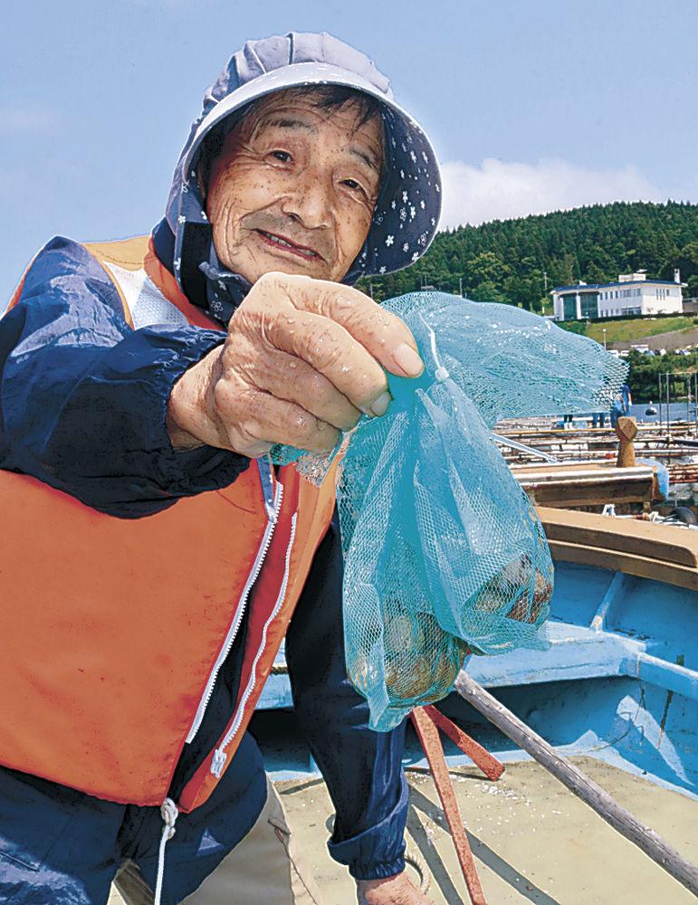 トリガイの稚貝を手にする生産者=七尾市能登島曲町