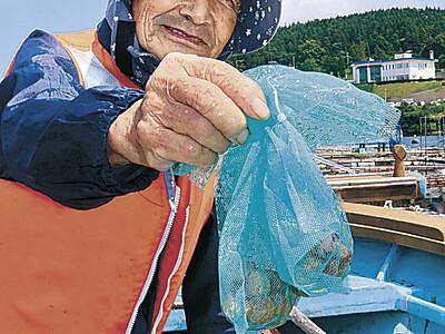 トリガイ稚貝 過去最多の10万個配布