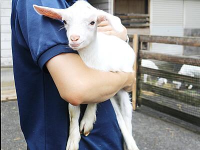シバヤギの赤ちゃん公開 富山市ファミリーパーク
