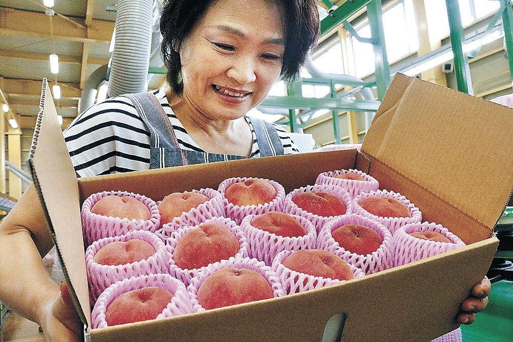 箱詰めされたモモ=銚子町のJA金沢市東部集出荷場