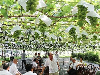 旬の甘さ手に取って 観光農園が開園式 新潟南区