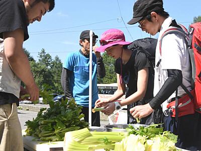 八ケ岳の麓でセロリ提供 諏訪地域の野菜PR