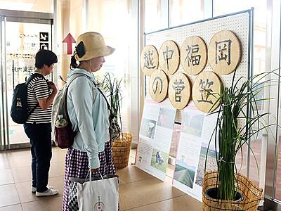 観光客に特産スゲPR 福岡の生産組合