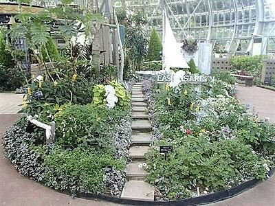 グリーンセンター温室のサマーガーデン 9月上旬まで見頃