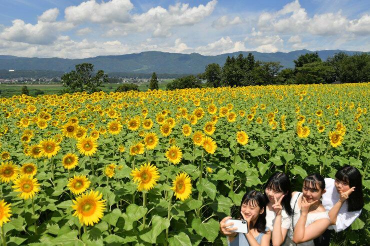 一面に咲き誇るヒマワリ畑で記念写真を撮る人たち=9日、飯山市瑞穂