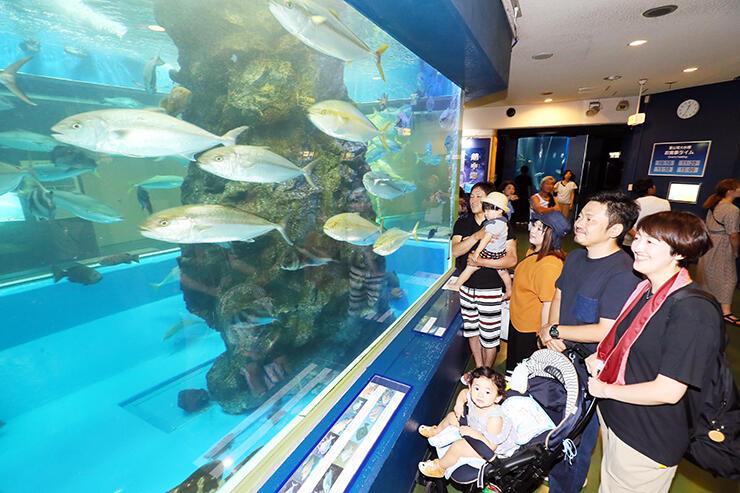 大水槽の中で泳ぎ回る魚たちを見る家族