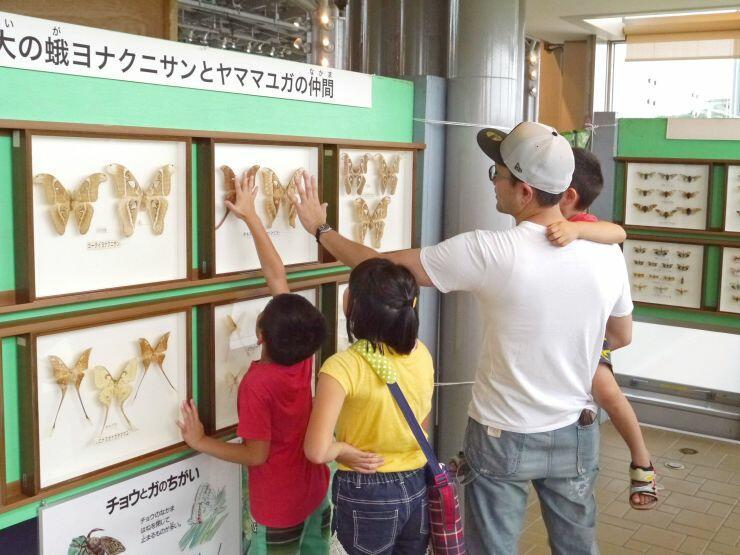 珍しい昆虫の標本に見入る家族連れ=国営越後丘陵公園