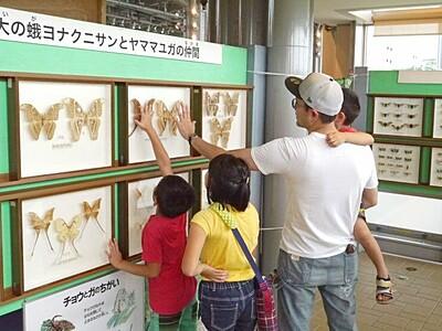 世界の昆虫 標本5000匹を展示 長岡・越後丘陵公園