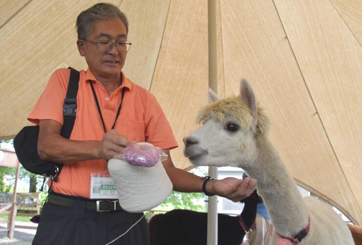 アルパカの毛で作った毛糸を持つ広田さんと牧場で飼育されているアルパカ