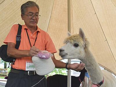 アルパカの毛糸販売 富士見の牧場、有効利用