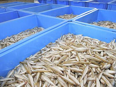 脂たっぷり、諏訪湖の味覚 ワカサギの投網漁解禁