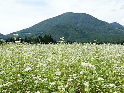 「須賀川そば」PR 山ノ内で7・8日「花まつり」