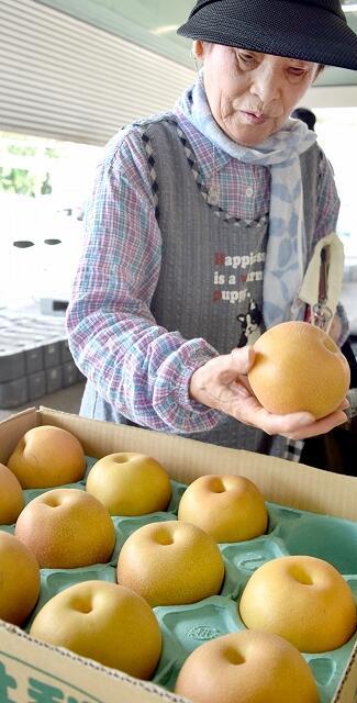 豊水の選果基準を確かめる生産者=9月6日、福井県あわら市牛山のJA花咲ふくいフルーツセンター