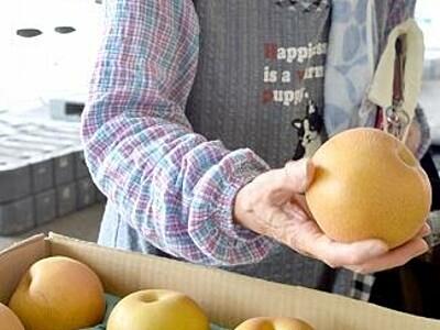 ナシ「豊水」収穫始まる 甘みも大きさも十分 福井県